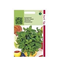 Maitsetaimede seemned
