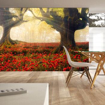 Fototapeet - Morning among poppies