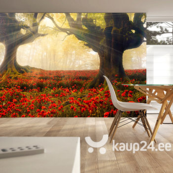 Fototapeet - Morning among poppies