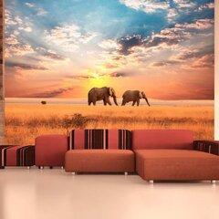 Fototapeet - African savanna elephants