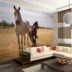 Fototapeet - Horse and foal