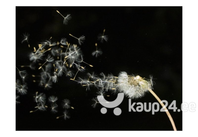 Fototapeet - Dandelion seeds carried by the wind