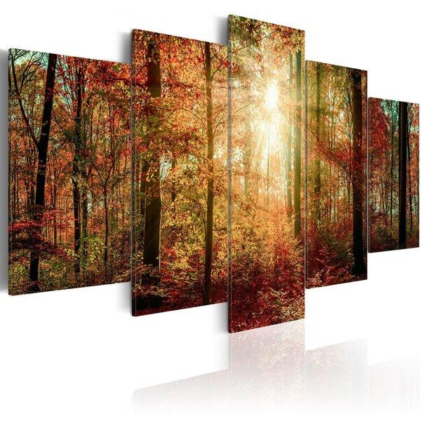 Maal - Autumn Wilderness