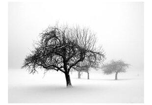 Fototapeet - Talv, puud hind ja info | Fototapeet - Talv, puud | kaup24.ee