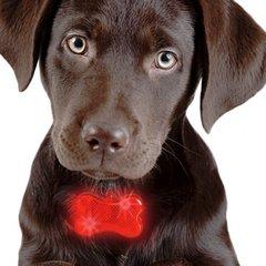 Särav LED ripats kaelarihmale, punane цена и информация | Поводки, ошейники и подтяжки для собак | kaup24.ee