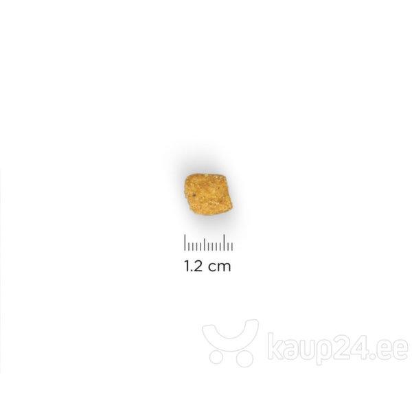 Hill's Science Plan Adult Oral Care kuivtoit kassidele kanaga, 7 kg Internetist