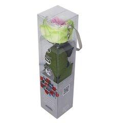 Stabiliseeritud mini pojengroos Amorosa tricolor hind ja info | Uinuvad roosid | kaup24.ee
