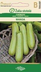 Suvikõrvits WANDA