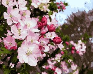 "Картина - раскраска по номерам ""Цветущая яблоня"" - GX9199"