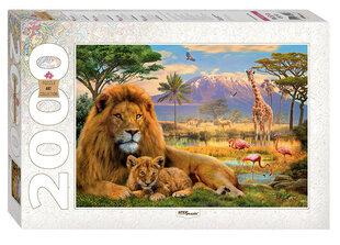 Pusle Step Puzzle 2000, Lõvid hind ja info | Pusle Step Puzzle 2000, Lõvid | kaup24.ee