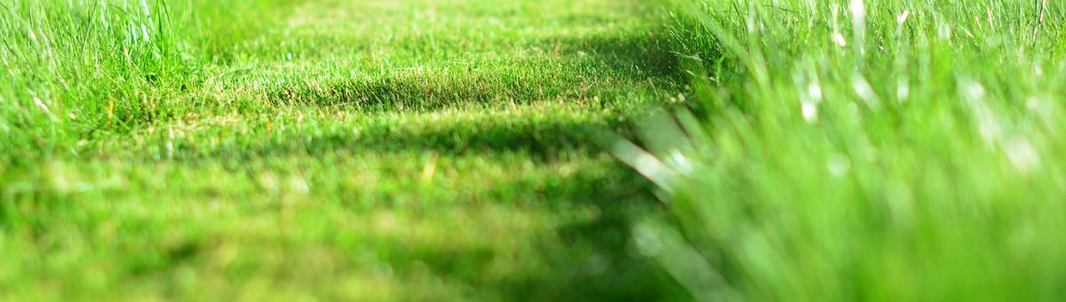 Muru niitmise tehnika: millist tüüpi valida?